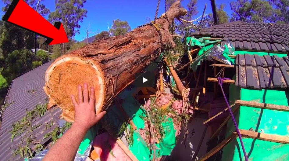 Hur mycket lutar trädet?